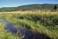 Oregon Spotted Frog Habitat