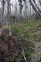 Northern Two-lined Salamander habitat
