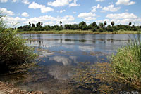 Northern Diamond-backed Watersnake habitat