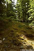 Larch Mountain Salamander habitat