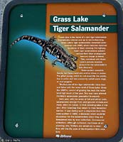 Tiger Salamander Sign