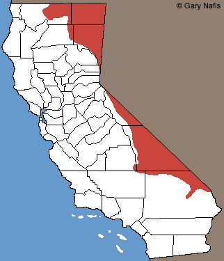 Desert Striped Whipsnake California Range Map